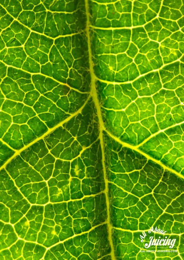 Green chlorophyll in leaf