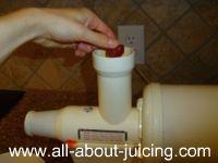 sorbet with champion juice