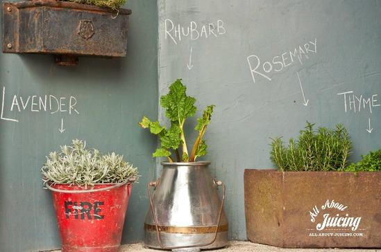 using herbs in juice